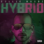 Collie Buddz Hybrid