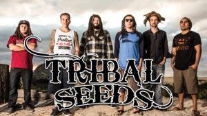 tribalseeds-1